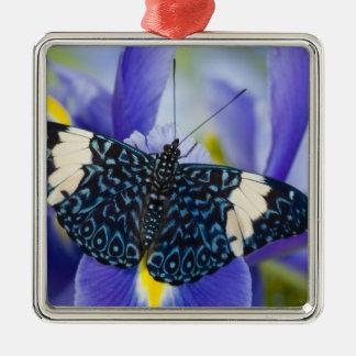 Sammamish, Washington. Papillons tropicaux 56 Ornement Carré Argenté