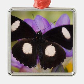 Sammamish, Washington. Papillons tropicaux 60 Ornement Carré Argenté