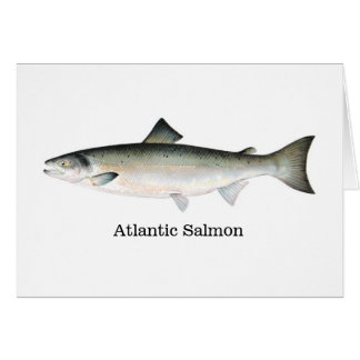 Saumon atlantique carte de vœux