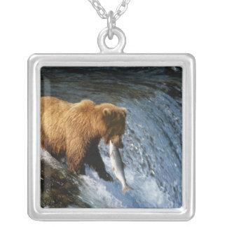 Saumon contagieux d'Alaska d'ours de Brown aux Collier