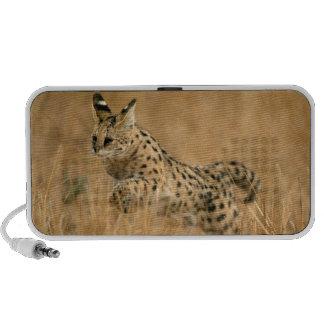 Sauter de Serval (Serval de Leptailurus) Haut-parleur iPhone