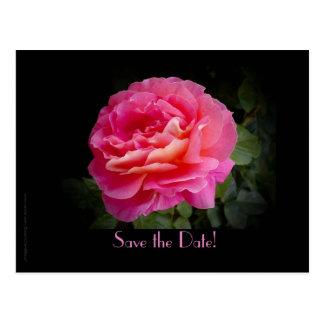Sauvez le rose de rose de cérémonie de carte postale