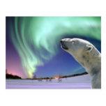 Sauvez les ours blancs mis en danger pour Noël Cartes Postales