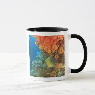 Scalaire nageant près du corail mou orange, Bligh Mug