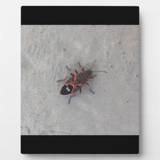Scarabée d'aîné de boîte photos sur plaques