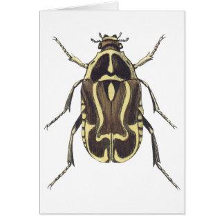 Scarabée de scarabée cartes