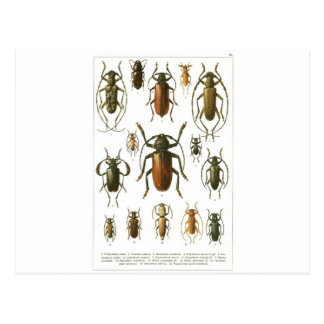 scarabées carte postale