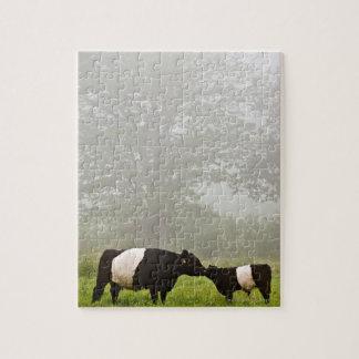 Scène brumeuse de la vache ceinturée à Galloway Puzzle