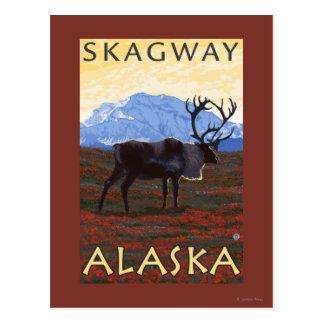 Scène de caribou - Skagway, Alaska Cartes Postales
