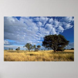 Scène de désert de Kalahari, Kgalagadi Poster