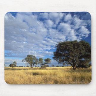 Scène de désert de Kalahari, Kgalagadi Tapis De Souris