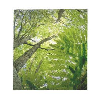 Scène de forêt en parc national d'Acadia, Maine Blocs Notes