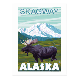 Scène d'orignaux - Skagway, Alaska Carte Postale