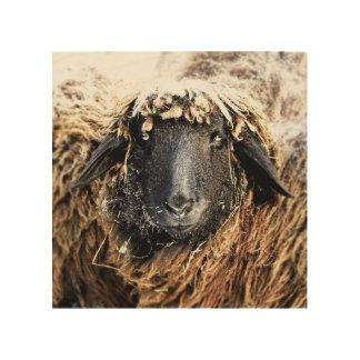 Schaf-Portrait-aufHolz Impression Sur Bois