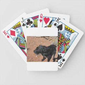 Schnauzer géant cartes à jouer