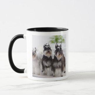 Schnauzers miniatures se tenant au bord de la mug