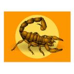 Scorpion Carte Postale