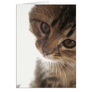 Scout : Carte vierge de visage curieux de chaton