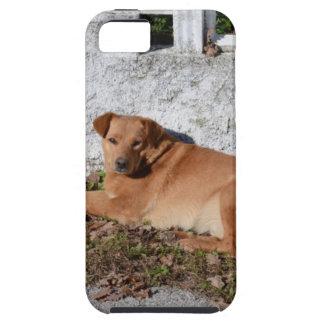 Se dorer au soleil coques iPhone 5 Case-Mate