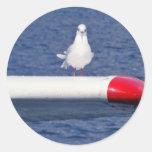 Seagull - Sticker