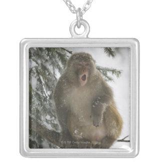 Séance de singe de Macaque de rhésus (mulatta de Pendentif Carré