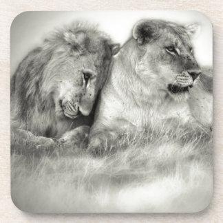 Séance et nuzzlingin Botswana de lionne et de fils Dessous-de-verre
