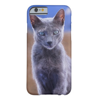 Séance femelle de chat, Maroc Coque Barely There iPhone 6