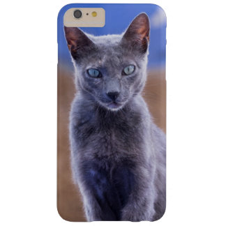 Séance femelle de chat, Maroc Coque iPhone 6 Plus Barely There
