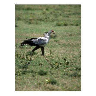 Secrétaire oiseau, pierre de transport cartes postales