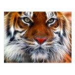 Seigneur des jungles indiennes, le tigre de Bengal Carte Postale