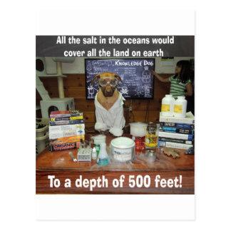 Sel de chien de la connaissance dans les océans cartes postales