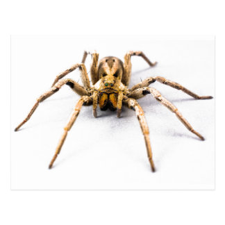 Sens d'araignée cartes postales