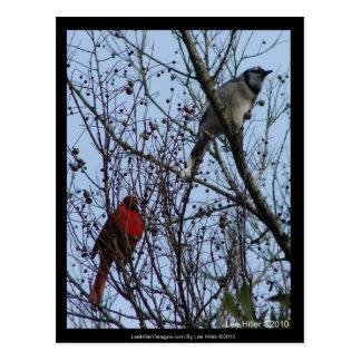 Sentinelles geai bleu et cardinal par Lee Hiller Carte Postale