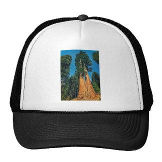 Séquoia puissant casquette