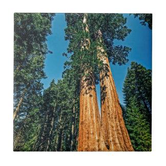 Séquoia puissant petit carreau carré
