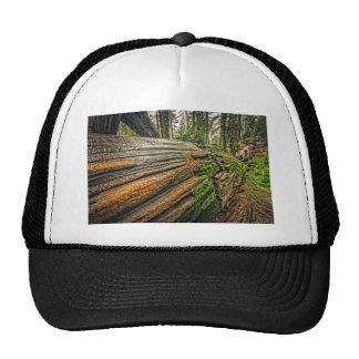 Séquoia tombé casquettes de camionneur