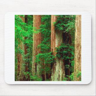 Séquoias antiques de Giants d arbre Tapis De Souris