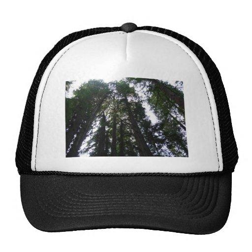 Séquoias Casquettes