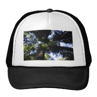 Séquoias Casquette De Camionneur