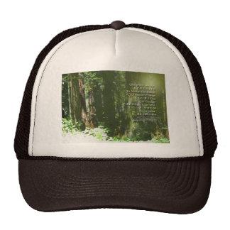 Séquoias de prière de sérénité casquette