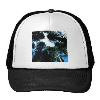 Séquoias de séquoias de forêt casquettes