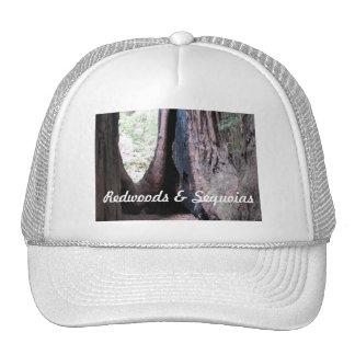 Séquoias et casquette de baseball de séquoias