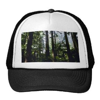 Séquoias forêt de Whaka Rotoua Casquettes De Camionneur