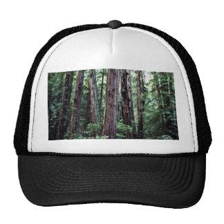 Séquoias - monument national en bois de Muir Casquettes