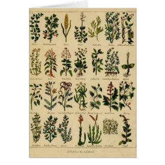 Série de fines herbes vintage de carte de voeux -