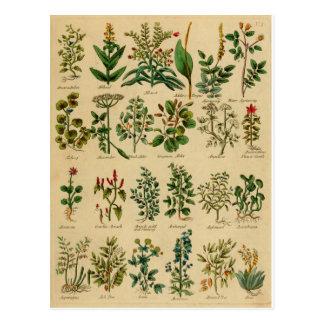 Série de fines herbes vintage de carte postale - 1