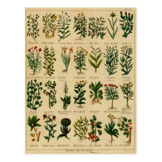 Série de fines herbes vintage de carte postale - 3