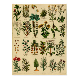 Série de fines herbes vintage de carte postale - 5