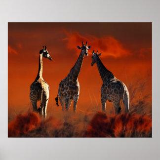 Série de girafe de la vie sauvage sud-africaine posters