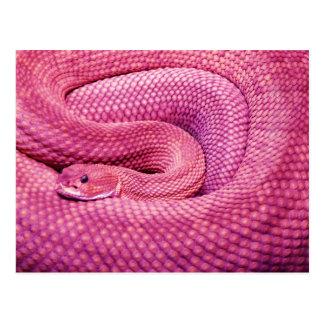 Serpent à sonnettes rose de basilic carte postale